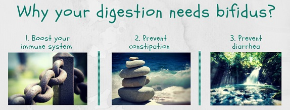 3 reasons why your digestion needs bifidus